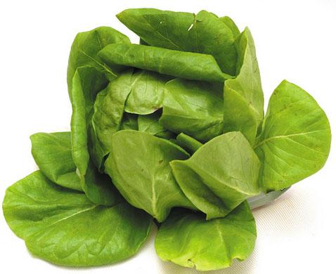 الخس Lettuce boston-lettuce.jpg