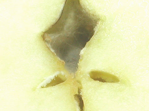 Apples-cavity