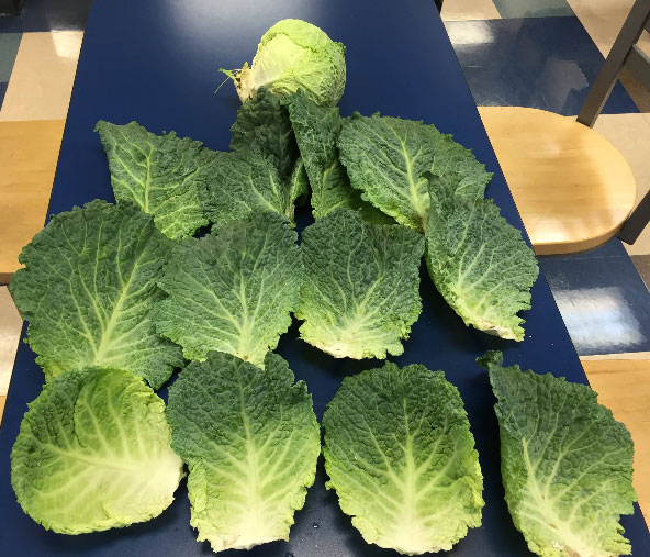 Cabbage-2