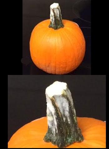 Pumpkin-mold
